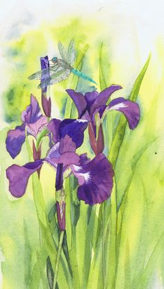 Dragonfly Irises - watercolour painting by Julie Horner