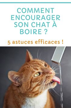 Son Chat, Animals And Pets, Education, Hilarious Animals, I Love Cats, Kittens, Tips, Health, Educational Illustrations