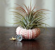 "The cuteness. I die.                           ""air plant  journey  garden."" via Etsy."