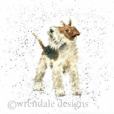 Animal Paintings, Animal Drawings, Wire Fox Terrier, Fox Terriers, Wirehaired Fox Terrier, Watercolor Animals, Watercolour, Wrendale Designs, Whimsical Art