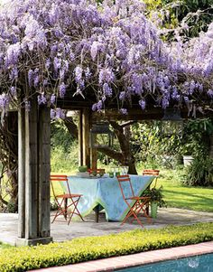 I had intended growing Wisteria Japonica over our arbour, until some friends told me about the upkeep their's requires.   Far to fast growing and inclined to take over nearby trees and fences.  Happy to enjoy pictures of other people's Wisteria.