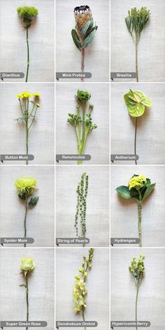 green flower guide from the Wedding Chicks I love these flower displays for when as an artist someone asks for a flower I don't know or a color flower- go see what these women do with flowers... they are amazing!