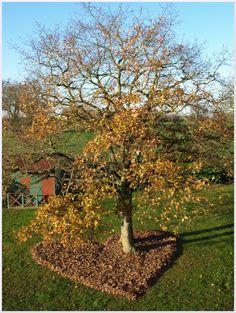 création avec des feuilles de chêne en décembre 2011 Land Art, Sculpture, Michel, Les Oeuvres, Nature, Plants, Leaves, Artist, Naturaleza