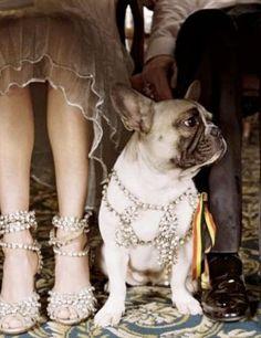 i like dogs at weddings. by Adina Paraschiv