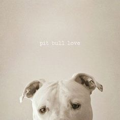 "Pitbull Photograph,  Pet Photography, Home Decor, Fine Art Photography 8x8 inches - ""Pit Bull Love"" on Etsy, $15.00"