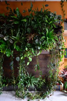 An Indoor Jungle Grows in a Brooklyn Apartment