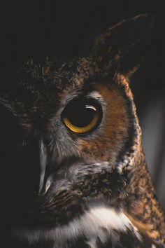 An owl's eye. beauty-belleza-beaute-schoenheit: From. Beautiful Owl, Animals Beautiful, Regard Animal, Animals And Pets, Cute Animals, Owl Eyes, Great Horned Owl, Tier Fotos, Owl Art