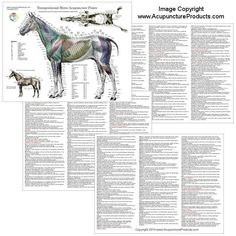 equine meridian chart | Details about Horse Equine Acupuncture Meridian Points Chart