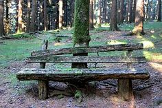 Forest bench