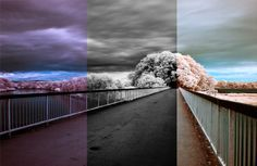 An In-Depth Guide to Infrared Photography: Processing