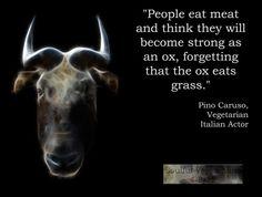 Animal Speaks a bit..