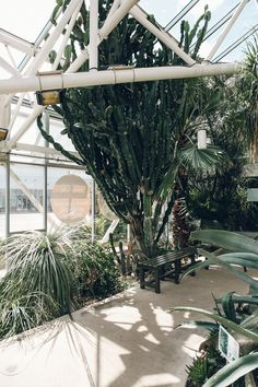 Huge cacti in a greenhouse, Plantasia.