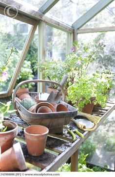 .Being in the greenhouse.. the smell of green things growing & dirt & the sunlight!!