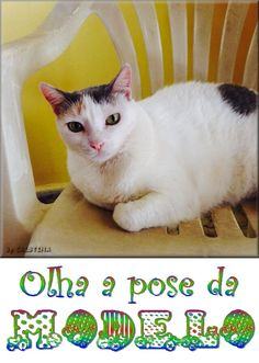 My cute cat: Branquinha. Like a lovely model!