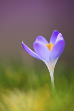 Great tips for flower photography