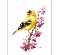 American Goldfinch  Original Watercolor Bird by CMwatercolors