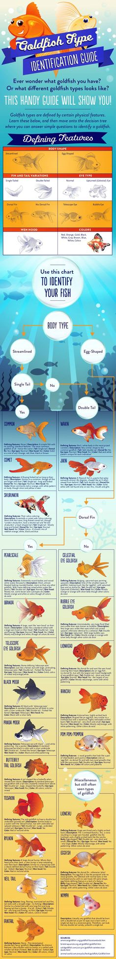 166 Best Aquarium Fish Infographics Images Fish Tanks Aquariums