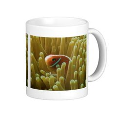 This coffee mug features a pair of Pink Skunk Clownfish in its sea anemone home on the Great Barrier Reef in the Coral Sea.