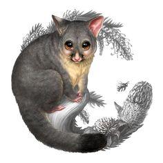 Australian Bush Babies II - Elise Martinson Portfolio - The Loop