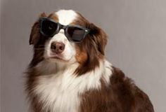 Warby Parker is awesome. Check out their April Fool's Day collection: Four-eyed and Four-legged inspiration.
