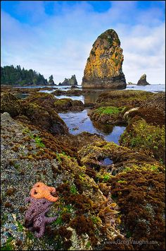 Point of Arches, Olympic National Park, Washington.