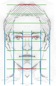 face proportions