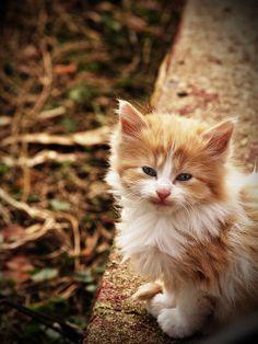 Another kitten ;-) by Josh Bonfili, via Flickr