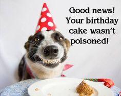 Dog Friendly Cake Happy Birthday Cakes Wishes Free