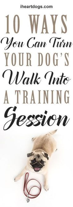 An Kety Pet Care. Tried And True Ways Of Effective Puppy Training. Good training will leave you and your pooch feeling happier. This article has lots of helpful advice about training your dog Dog Potty, Best Dog Training, Dog Hacks, Dog Barking, Dog Care, Best Dogs, Dogs And Puppies, Doggies, Dog Stuff