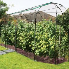 This Long Narrow Fruit Cage comes complete with a zip net offering protection from birds and small animals, whilst doubling up as a door. It is constructed from black polymer coated galvanised steel and comes with our 15 year guarantee.