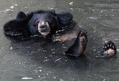 Cute Animals: Baby Bear Cubs