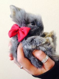 Pretty Bunny With Bow
