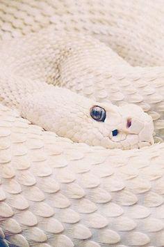White textured snake skin
