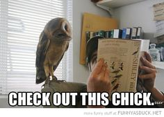 Animals Reading Books | owl bird animal reading book check out this chick funny pics pictures ...