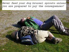 Dog Farts Kill!