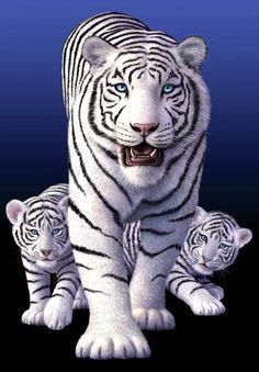 White tiger iphone wallpaper background iphone wallpaper white tigers by jerry lofaro thecheapjerseys Image collections