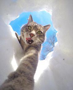 【画像あり】自分撮りが好きな猫、犬たちを引き連れて撮影するwww