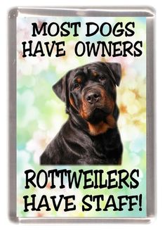 """Acquire great tips on """"rottweiler pups"""". They are actually on call for you on ou… Holen Sie sich tolle Tipps für Rottweiler Welpen. I Love Dogs, Cute Dogs, Big Dogs, Rottweiler Puppies, Rottweiler Quotes, Rottweiler Facts, German Rottweiler, Rottweiler Training, Dog Training Tips"""
