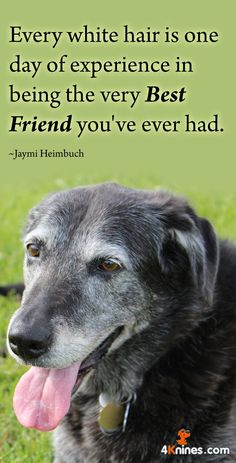 Our lives will never be the same without our dog!