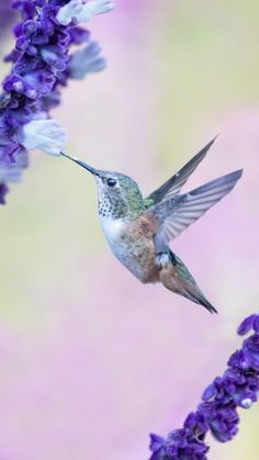 Flight, flowers, cute, hummingbird, 720x1280 wallpaper
