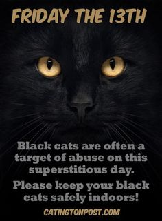 - Protect your cats on Friday the 13th  (Catington Post)