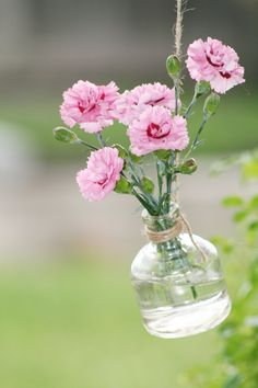 Dianthus flowers hanging in a vase