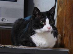 凡太、回復する - http://iyaiyahajimeru.jp/cat/archives/65110