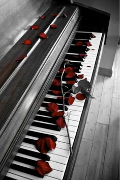 Quick write: mood and setting piano with rose petals.How did the rose petals wind up on the piano? The Piano, Piano Girl, Piano Man, Piano Keys, Piano Music, Color Splash, Color Pop, Piano Photography, Photography Ideas