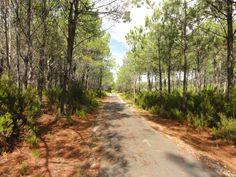 Entre océan et forêt, une piste cyclable.