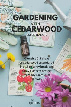 Cedarwood essential oil can be a powerful tool for your gardening this time of year. Combine 2-3 drops of Cedarwood essential oil in a 16 oz spray bottle and spray plants to protect from environmental threats.