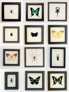 walls filled with framed insects! do want!