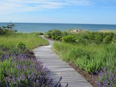 The Good Garden by Edmund Hollander  A boardwalk made of hardwood ipe planks cuts across a dune, the path edged with cape beachgrass (Ammophila breviligulata 'Cape') and wind- and salt-tolerant perennial flowers including Russian Sage (Perovskia atriplicifolia), catmint (Nepeta 'Dropmore'), and sage (Salvia x sylvestris 'Rhapsody in Blue').