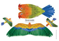 Paper model of a rainforest parrot that really flies (from Scholastic) 3d Paper Crafts, Paper Toys, Diagrammes Origami, Animal Cutouts, Animal Templates, Making A Model, Make Your Own Card, Paper Birds, Paper Animals