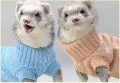 animals tumblr - Google Search